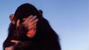 mono ruborizado